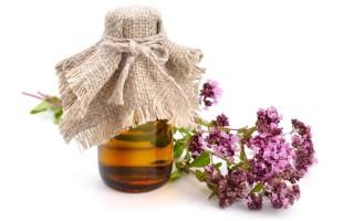 Эфирное масло орегано – полезные свойства и противопоказания