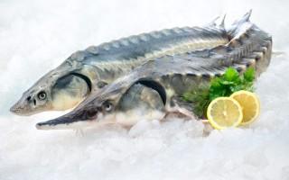 Осетр – полезные свойства и противопоказания царской рыбы
