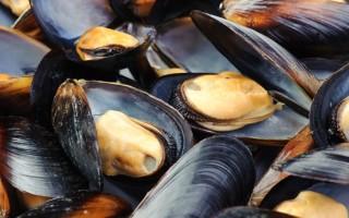 Мидии – полезные свойства, польза и вред съедобных моллюсков