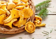 Лисички лечебные свойства и противопоказания грибов с хитринкой