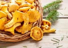 Польза и вред лисичек: лечебные свойства грибов с хитринкой