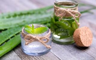 Польза и вред сока алоэ с зеленой мякотью
