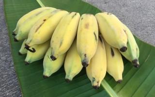 Бананы манзано – полезные свойства шелковых бананов