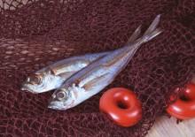 Рыба путассу: польза и вред, советы по выбору