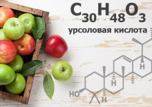 Урсоловая кислота — полезные свойства, противопоказания и содержание в продуктах