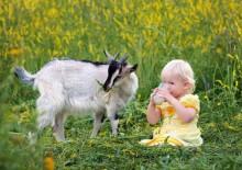 Польза и вред козьего молока для взрослых и детей