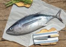 Полезные свойства тунца