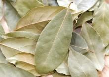 Полезные свойства лаврового листа или лаврушки