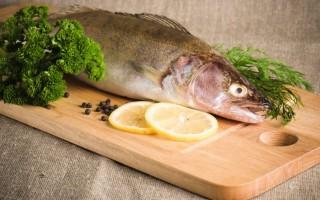 Пресноводная рыба судак: польза и вред, вкус и выбор