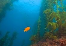 Польза морских водорослей в ассортименте