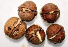 Пророщенные грецкие орехи — польза и вред живительных ядрышек