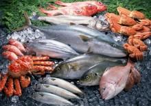 Полезные свойства популярных видов морской рыбы