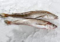 Рыба хек: вред или польза для здоровья человека