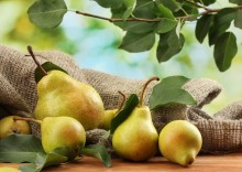 Польза и вред груши для здоровья: лакомство и лекарство одновременно