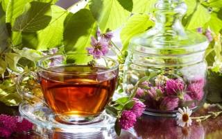 Полезные свойства чая из красного клевера