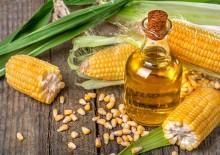 Кукурузное масло — полезные свойства и противопоказания, советы по приёму