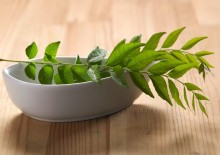Полезные свойства листьев карри