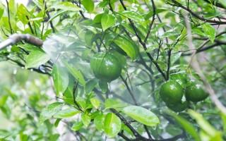 Фрукты с пестицидами