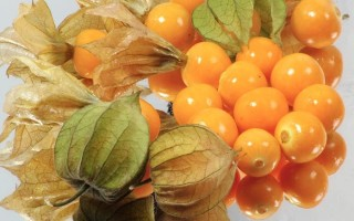 Физалис – полезные свойства изумрудной ягоды