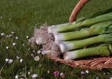 Полезные свойства лука-порея или жемчужного лука