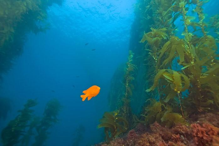 мир водорослей