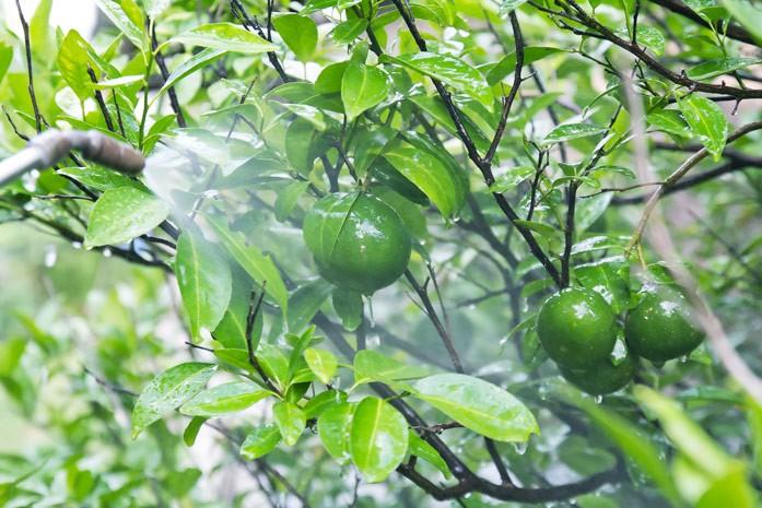 пестициды и фрукты