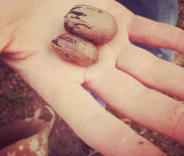 как расколоть пеканы руками: друг об друга в кулаке