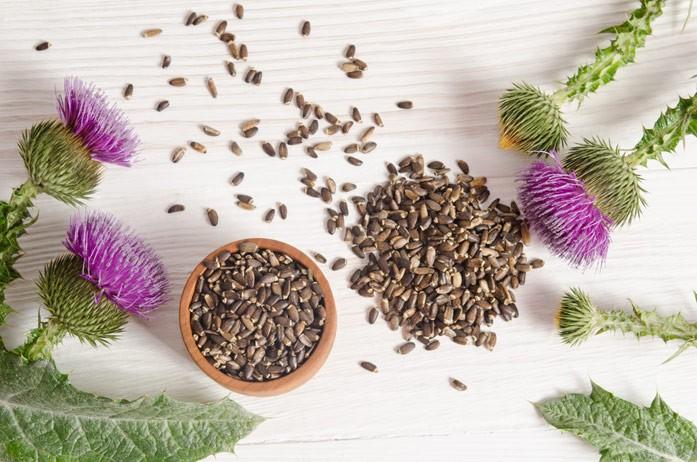 расторопша с семенами для похудения