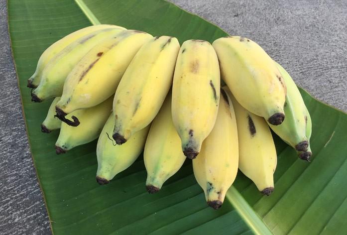 бананы манзано