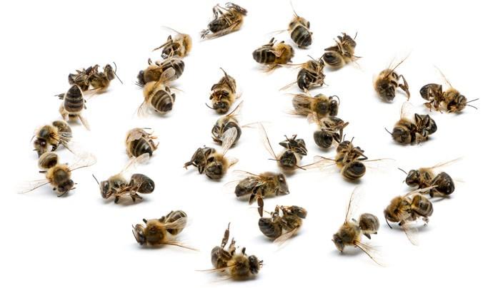 неживые пчелы